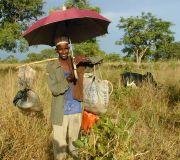 Kuhhirte in Benin